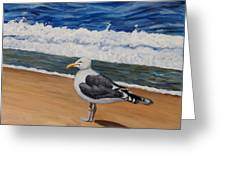 Seagull At The Seashore Greeting Card