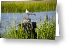 Seagull At Weeks Landing Greeting Card by Bill Cannon