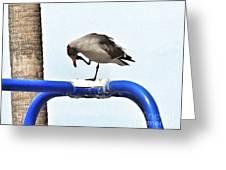 Seagull Balancing Act Greeting Card