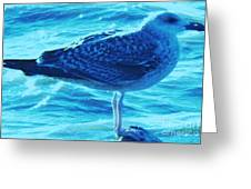 Seagull Basking In The Sun Greeting Card