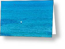 Seagull Cruising Over Azure Blue Sea Greeting Card