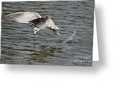 Seagull Dive Greeting Card