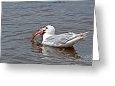 Seagull Eating Huge Fish In Water Art Prints Greeting Card