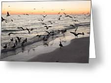 Seagulls Feasting Greeting Card