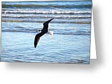 Seagull Flight Greeting Card