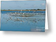 Seagull Flock Greeting Card
