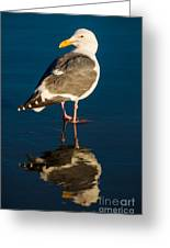 Seagull Harris Beach - Oregon Greeting Card