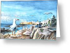 Seagull In Essaouira In Morocco Greeting Card