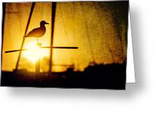 Seagull In Harbor Sunset Greeting Card