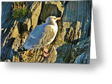 Seagull In Shadow Greeting Card