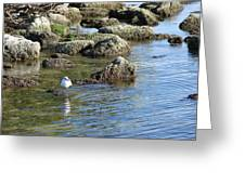 Seagull In The Water Greeting Card