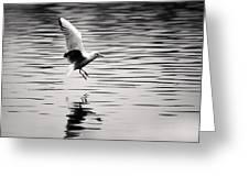 Seagull Landing On Lake Greeting Card