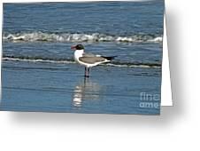 Seagull Greeting Card