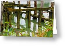 Seagull Nesting Dock Greeting Card