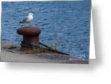 Seagull On A Bollard  Greeting Card