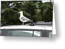 Seagull On Car Greeting Card