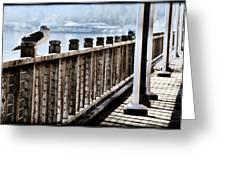 Seagull On The Boardwalk Greeting Card