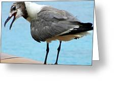 Seagull On The Rail Greeting Card