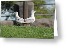 Seagull Opposites Greeting Card