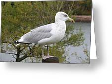 Seagull Outlook Greeting Card