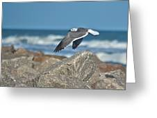 Seagull Parallel Greeting Card