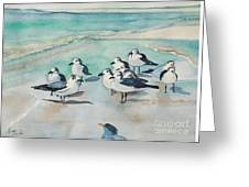 Seagull Party Greeting Card