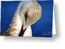 Seagull Portrait Greeting Card