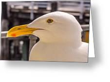 Seagull Profile Greeting Card