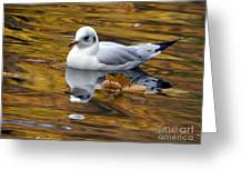 Seagull Resting Among Fall Leaves Greeting Card