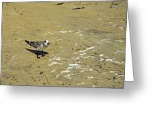 Seagull Scurry  Greeting Card