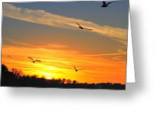 Seagull Serenity Greeting Card