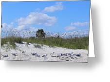 Seagull Siesta Greeting Card