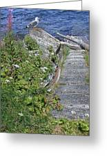 Seagull Steps Guard Island Alaska Greeting Card