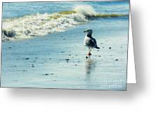 Seagull Stroll Greeting Card