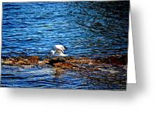 Seagull Wings Lifted Greeting Card