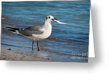 Seagull With Fish 1 Greeting Card