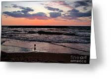 Seagull With Sunset Greeting Card by M C Sturman
