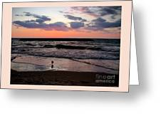 Seagull With Sunset Greeting Card