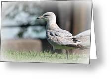 Seagulls 1 Greeting Card