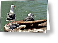 Seagulls Against Rust Greeting Card