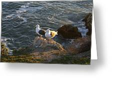 Seagulls Aka Pismo Poopers Greeting Card