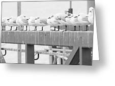 Seagulls In A Row Greeting Card