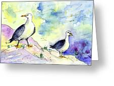 Seagulls In Calpe In Spain Greeting Card