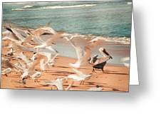 Seagulls In Flight Greeting Card