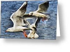 Seagulls In Flight - Drawing Greeting Card