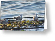 Seagulls In Victoria Bc Greeting Card