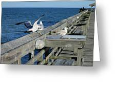 Seagulls Greeting Card by Nelson Watkins