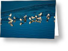 Seagulls On Frozen Lake Greeting Card