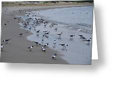 Seagulls On The Delaware Bay Greeting Card by Bill Cannon