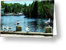Seagulls On The Pier Greeting Card